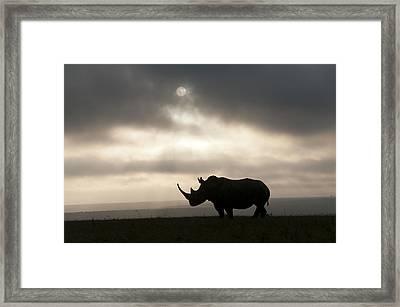 White Rhinoceros At Sunset Kenya Framed Print by Tui De Roy