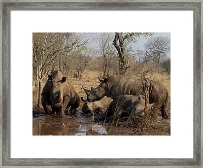 White Rhinoceros Ceratotherium Simum Framed Print by Panoramic Images
