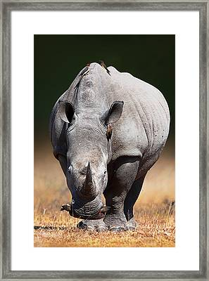 White Rhinoceros  Front View Framed Print