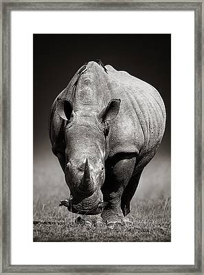 White Rhinoceros  In Due-tone Framed Print