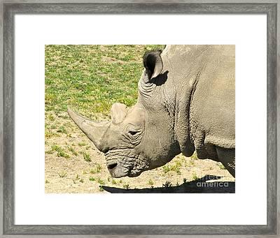 White Rhinoceros Portrait Framed Print by CML Brown