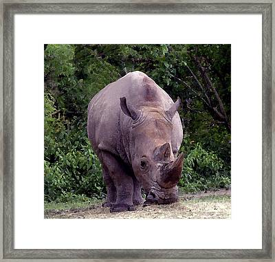 White Rhinoceros Water Coloring Framed Print