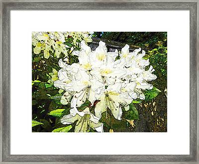Framed Print featuring the photograph White Rhodo Chalk by Laurie Tsemak