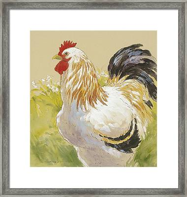 White Rooster Framed Print by Tracie Thompson