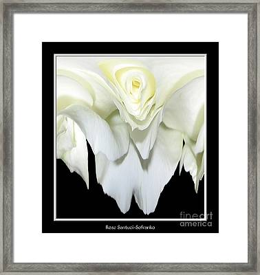White Rose Abstract Framed Print by Rose Santuci-Sofranko
