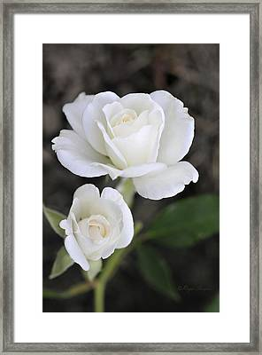 White Rose Duo Framed Print