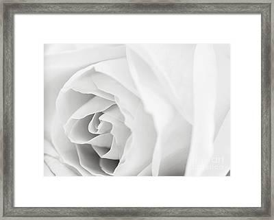 White Rose Framed Print by Elena Elisseeva