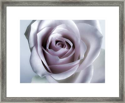 White Roses Flowers Art Work Photography Framed Print by Artecco Fine Art Photography