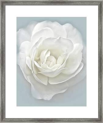 White Rose Flower Silver Blue Framed Print by Jennie Marie Schell