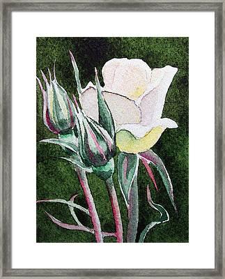 White Rose Framed Print by Irina Sztukowski