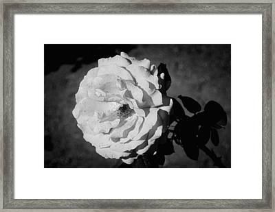 White Flower Framed Print by John Rossman