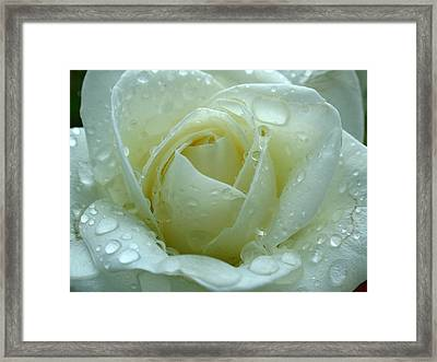 White Rose Framed Print by Juergen Roth