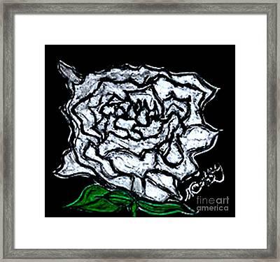 White Rose Framed Print by Neil Stuart Coffey