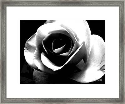 White Rose Framed Print by Nina Ficur Feenan