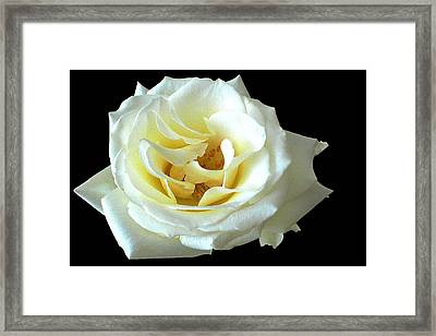 White Rose Number One Framed Print