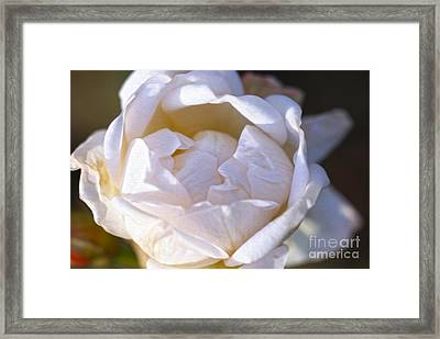 White Rose Framed Print by Nur Roy