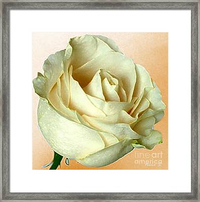 Framed Print featuring the photograph White Rose On Sepia by Nina Silver