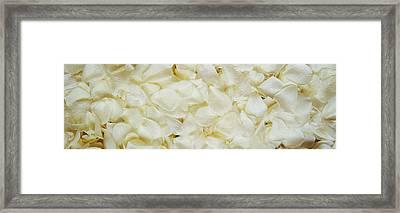White Rose Petals Framed Print