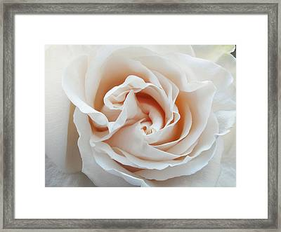 Framed Print featuring the photograph White Rose by Tiffany Erdman