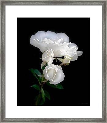 White Roses In The Moonlight Framed Print by Jennie Marie Schell