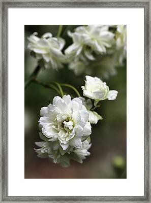 Framed Print featuring the photograph White Roses by Joy Watson