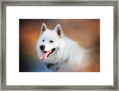 White Samoyed Portrait Framed Print