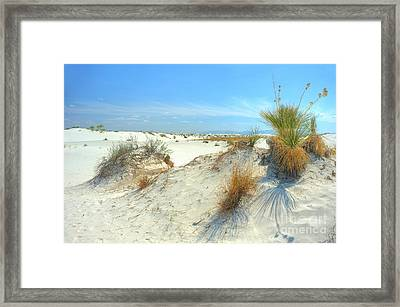 White Sands Foliage Framed Print by John Kelly