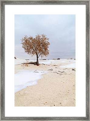 White Sands Lone Tree Framed Print by Brian Harig