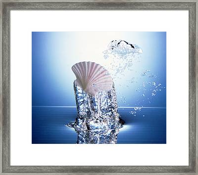 White Scallop Shell Being Raised Framed Print