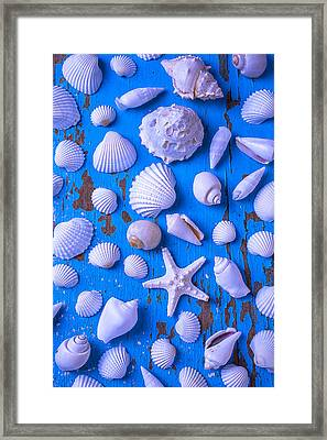 White Sea Shells On Blue Board Framed Print by Garry Gay