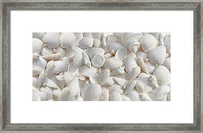 White Seashells And Pearls 2 Framed Print