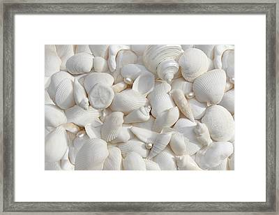 White Seashells And Pearls Framed Print