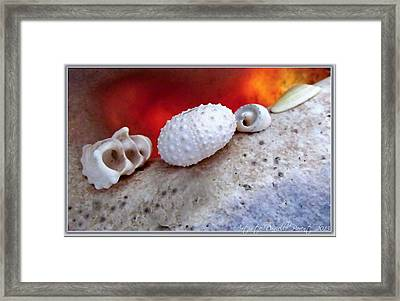 White Seashells And Purple Conch  Framed Print by Danielle  Parent