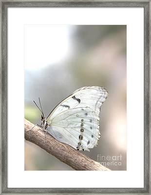 White Serenity Framed Print