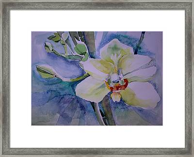 White Shades Of Orchid Framed Print by Mindy Newman
