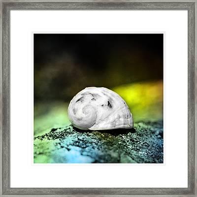White Shell On A Rock Framed Print