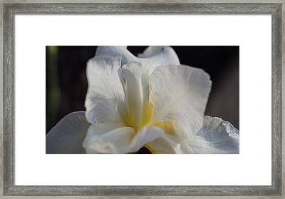 White Siberian Iris Macro Framed Print