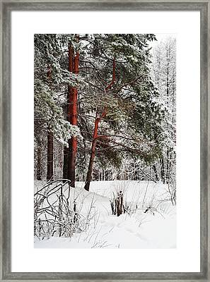 White Silence 1 Framed Print