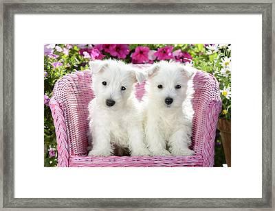 White Sitting Dogs Framed Print