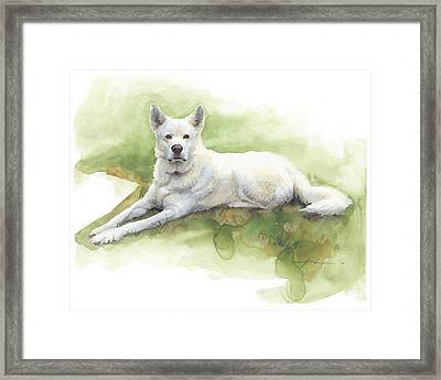 White Sled Dog Lying On Grass Watercolor Portrait Framed Print by Mike Theuer