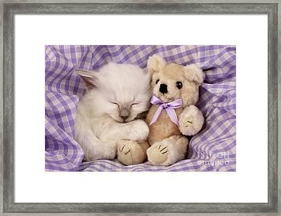 White Sleeping Cat Framed Print