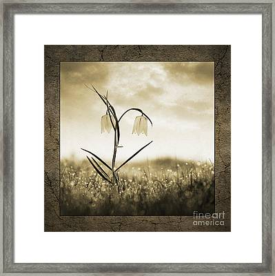 White Snakes Head Fritillary In Morning Dew Framed Print