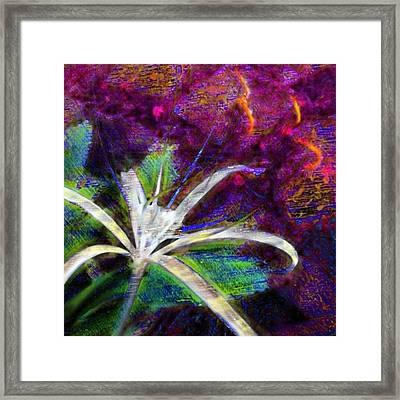 White Spider Flower On Orange And Plum - Square Framed Print