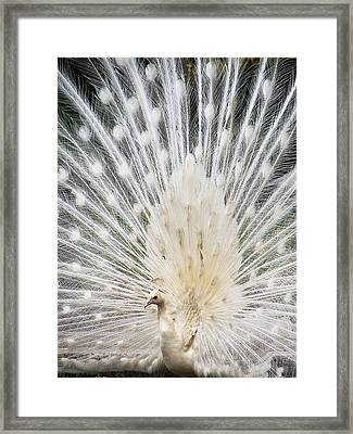 Framed Print featuring the photograph White Spray by Blair Wainman