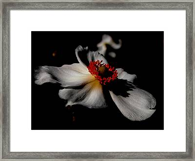 White Spring Framed Print