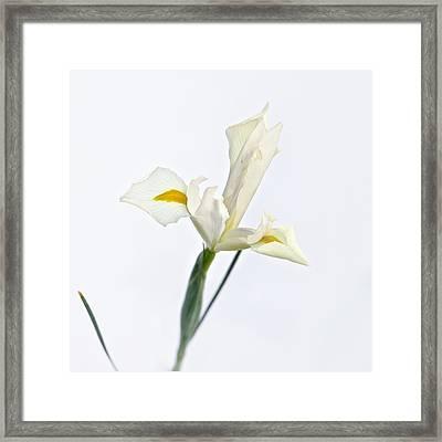 White Iris On White Framed Print
