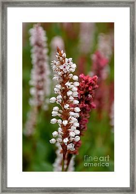 White Stalk Flower Framed Print