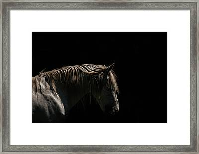 White Stallion - Black Background Framed Print by Ryan Courson Photography