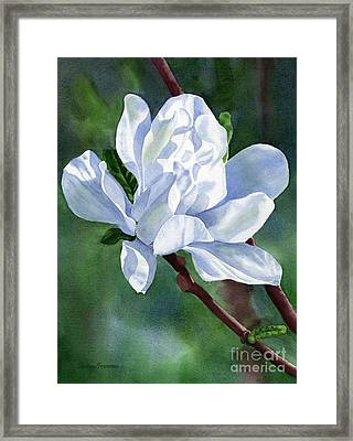 White Star Magnolia Blossom With Background Framed Print by Sharon Freeman
