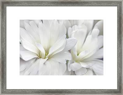 White Star Magnolia Flowers Framed Print by Jennie Marie Schell
